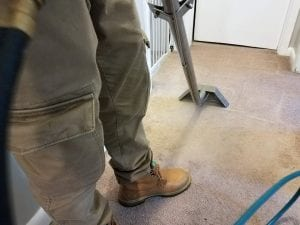 Steam cleaning carpets in Burlington NJ